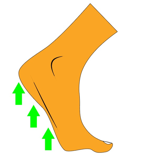Heel Raise Exercise For Flat Feet